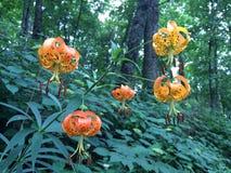 奇怪的橙色花 免版税库存照片