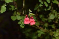 奇怪的红色花 库存照片