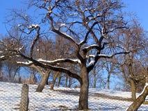 奇怪的结构树 库存照片