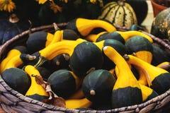 奇怪的装饰Haloween南瓜Variaty在季节性农夫` s市场上的 免版税库存图片