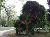 奇怪的结构树 免版税库存照片