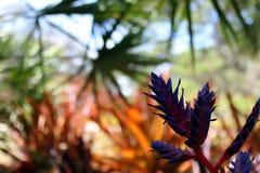 奇怪的紫色野花有被弄脏的背景 库存图片