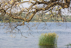 默奇森瀑布国家公园的,乌干达尼罗河 免版税库存照片
