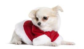 奇瓦瓦狗克劳斯・圣诞老人坐的诉讼 免版税图库摄影