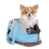 奇瓦瓦狗和旅行袋子 免版税库存照片