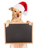 奇瓦瓦狗混合圣诞老人帽子和空白的标志 库存图片
