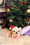 奇瓦瓦狗狗睡着在圣诞树下,新年卡片 库存图片