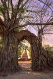奇迹对时间消逝的`门户在Wat Phra NgamWat查家Ram, Phra Nakorn Si阿尤特拉利夫雷斯,泰国废墟的`  免版税库存照片