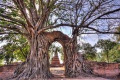 奇迹对时间消逝的`门户在Wat Phra NgamWat查家Ram, Phra Nakorn Si阿尤特拉利夫雷斯,泰国废墟的`  库存图片