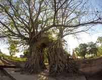 奇迹对时间消逝的`门户在Wat Phra NgamWat查家Ram, Phra Nakorn Si阿尤特拉利夫雷斯,泰国废墟的`  图库摄影
