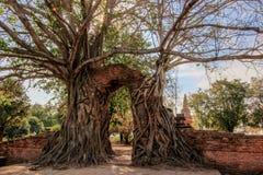 奇迹对时间消逝的`门户在Wat Phra NgamWat查家Ram, Phra Nakorn Si阿尤特拉利夫雷斯,泰国废墟的`  免版税图库摄影