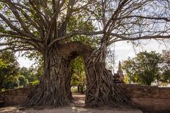 奇迹对时间消逝的`门户在Wat Phra NgamWat查家Ram, Phra Nakorn Si阿尤特拉利夫雷斯,泰国废墟的`  库存照片