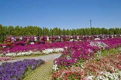 奇迹庭院,迪拜 免版税图库摄影