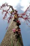 奇迹结构树 库存图片