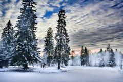 奇迹雪盖的冬天森林 图库摄影