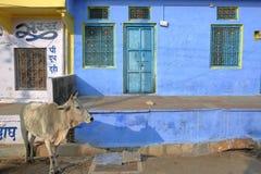 奇陶尔加尔,拉贾斯坦,印度- 2017年12月13日:与摆在一个五颜六色的传统房子前面的母牛的街道场面 库存图片
