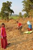 奇陶尔加尔,拉贾斯坦,印度- 2017年12月13日:在工作在领域和准备在coun的农夫的特写镜头玉米stover 免版税库存图片