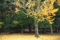 奈良公园在奈良,日本 库存图片
