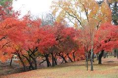 奈良公园在奈良,日本 免版税图库摄影