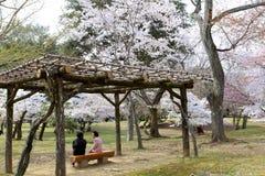 奈良公园,日本 免版税库存照片