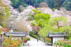 奈良寺庙在春天 免版税库存照片