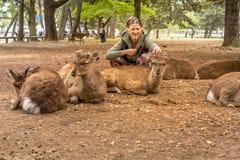 奈良饥饿的鹿 免版税库存图片