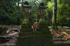 奈良鹿 神圣,人们 免版税图库摄影