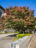奈良,日本- 2017年7月26日:一棵大树的美丽的景色与绿色和红色秋叶,在的五颜六色的叶子的 库存照片