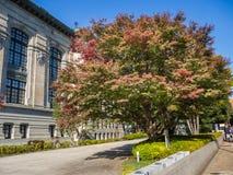 奈良,日本- 2017年7月26日:一棵大树的美丽的景色与绿色和红色秋叶,在的五颜六色的叶子的 免版税库存照片