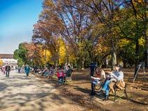 奈良,日本- 2017年7月26日:坐在公园和拍照片的未认出的人民,享受看法  库存照片