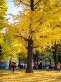 奈良,日本- 2017年7月26日:拍照片和享受美好的秋天风景的看法的未认出的人民 图库摄影