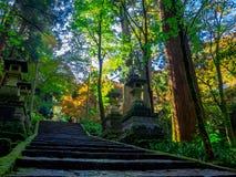 奈良,日本- 2017年7月26日:看法在楼上在有秋天风景、黄色、橙色秋天树和叶子的一个公园 库存照片