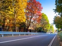 奈良,日本- 2017年7月26日:秋天风景美丽的景色在路的,有黄色秋天树和叶子的 免版税库存照片