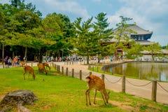 奈良,日本- 2017年7月26日:走到有一些野生鹿的Todai籍寺庙的未认出的人民在前面,与  免版税库存图片