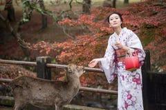 奈良,日本- 11月26 :游人和野生鹿在11月的奈良 免版税图库摄影