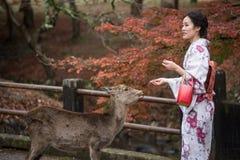 奈良,日本- 11月26 :游人和野生鹿在11月的奈良 免版税库存图片
