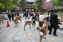 奈良 免版税库存图片