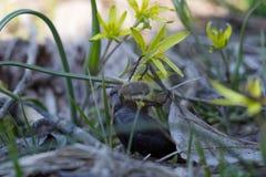 奋斗和竞争 小的毛茸的甲虫似乎勇敢地与黑厚实的甲虫战斗为黄色花 免版税库存照片