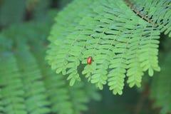 奋斗在叶子的昆虫为活 免版税库存图片