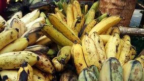 从奎松市省菲律宾的香蕉束 图库摄影