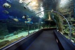 索契发现世界水族馆 免版税库存图片