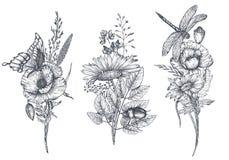 套三传染媒介百花香用黑白手拉的草本、野花和昆虫 皇族释放例证