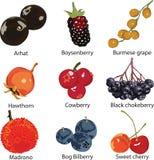 套不同的浆果 库存图片