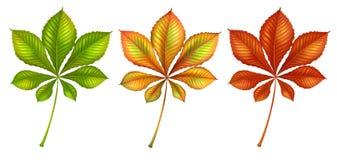 套不同的颜色叶子 皇族释放例证