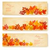 套与五颜六色的秋叶的三副自然横幅 库存图片