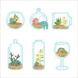 套与另外多汁植物和仙人掌的平的florariums设计现代内部的 一个玻璃水族馆的植物 免版税库存图片