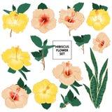 套与开花的加尔德角的夏天木槿花卉贺卡 库存例证