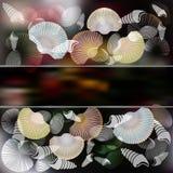 套与时髦的构成和黑暗的背景的海扇壳 免版税库存照片