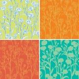 套与春黄菊的无缝的样式 免版税库存图片