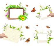套与照片、绿色叶子、花和insec的夏天框架 库存图片